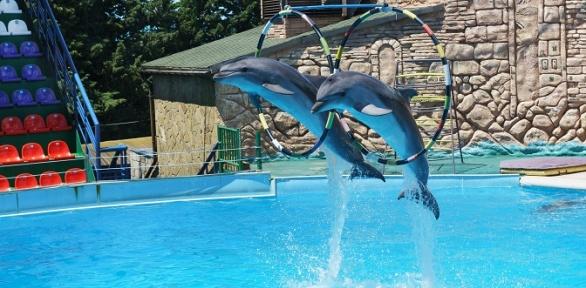 Билет напосещение дельфинария или зоопарка вДжубгинском парке развлечений