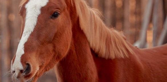 Прогулка налошади от«Тверицкого конного клуба»