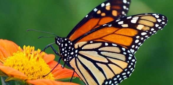 2билета навыставку живых тропических бабочек заполцены