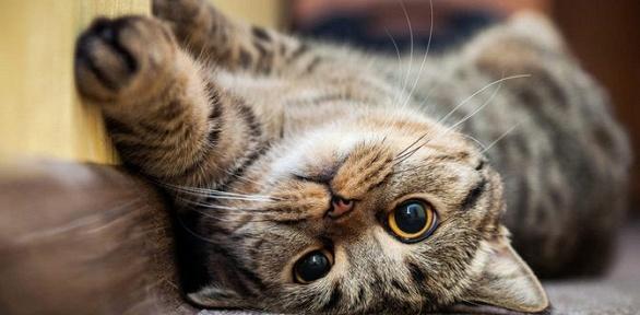 Экскурсия исладости вантикафе «Кот надереве»