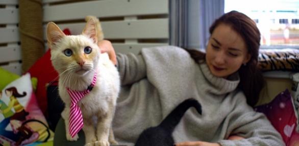 2или 3часа посещения котокафе Cat Joy
