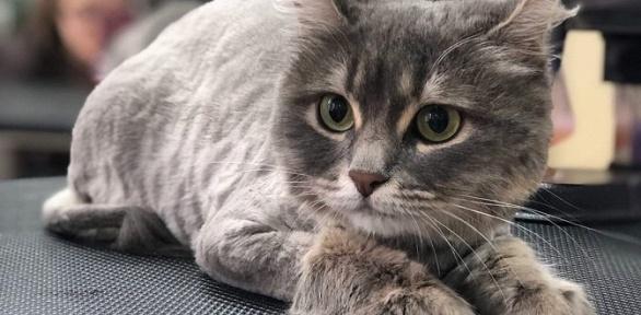 Груминг для кошек, уход засобаками всалоне «Милорд»