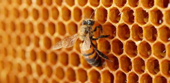 До5сеансов оздоровительного отдыха напчелиных ульях в«Апи-домике»