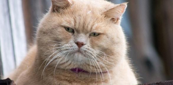 Стерилизация кошек исобак вклинике «ВетLove»
