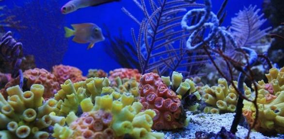Экскурсия в«Морском аквариуме наЧистых прудах»