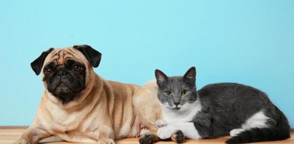 Ветеринарные услуги всети клиник «АльфаВет»