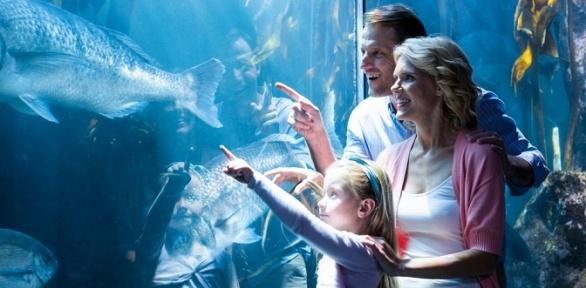 Билет для взрослого или ребенка вгалерею аквариумов «Акванариум»