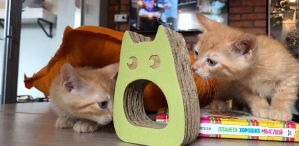 Экскурсия спосещением котокафе «Город кошек»