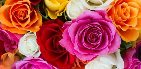Букет изэквадорских роз либо сборный букет