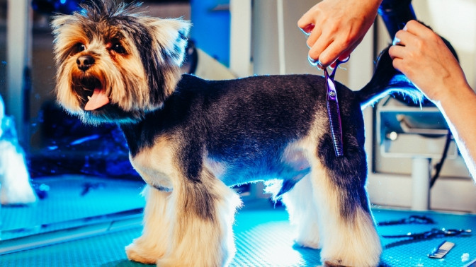 Скидка до 53%. Груминг, стрижка, комплексная гигиена для собаки или кошки всалоне для животных Groom